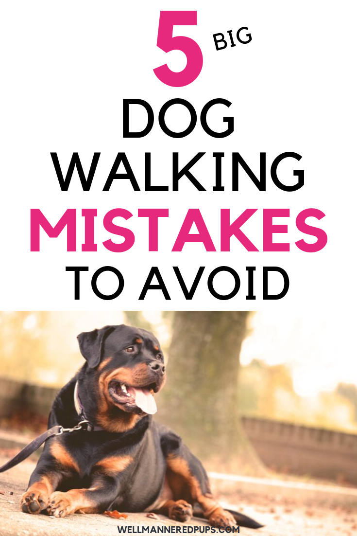 Dog walking mistakes to avoid