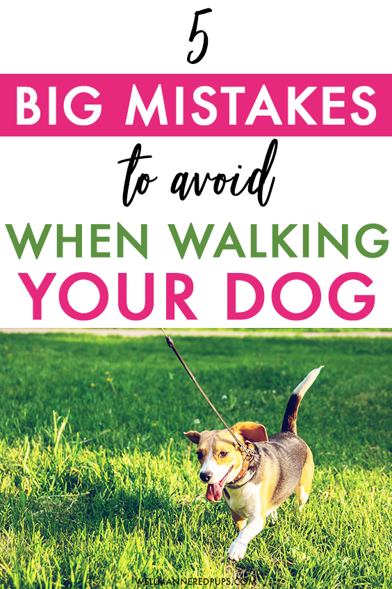 Mistakes to avoid when walking your dog