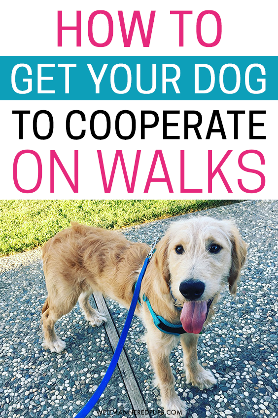How to get your dog to cooperate on walks