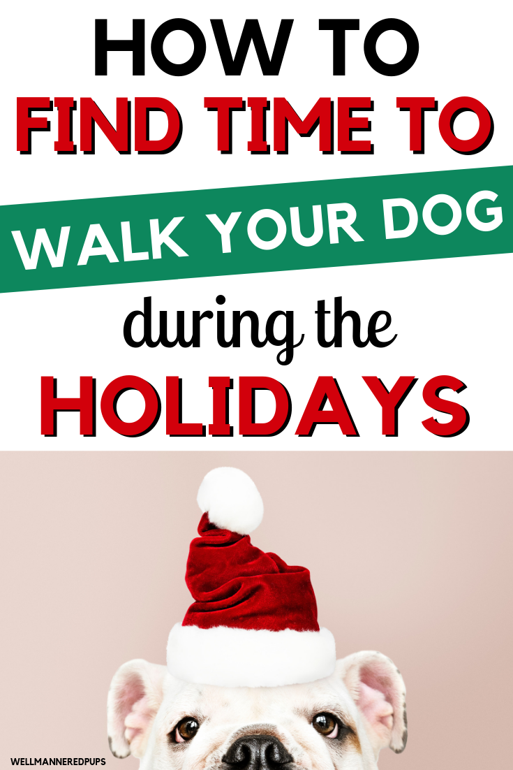 How to find time to walk your dog during the holidays