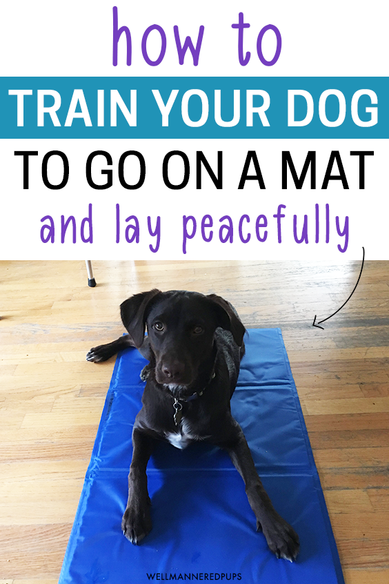 How to train your dog to go on a mat and lay peacefully