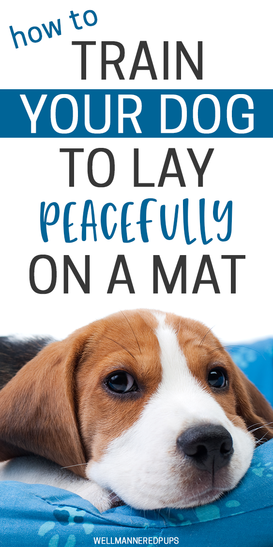 How to train your dog to lay peacefully on a mat