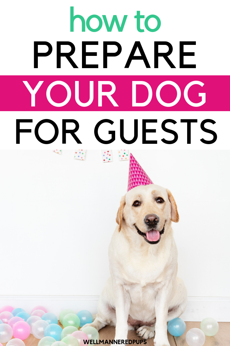 How to prepare your dog for guests