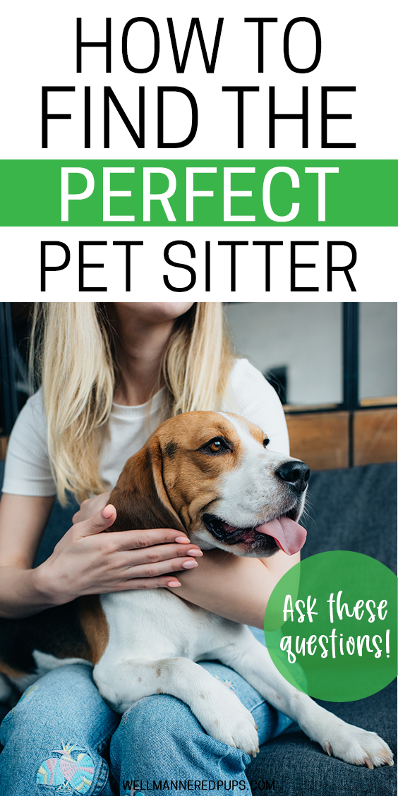 How to find the perfect pet sitter