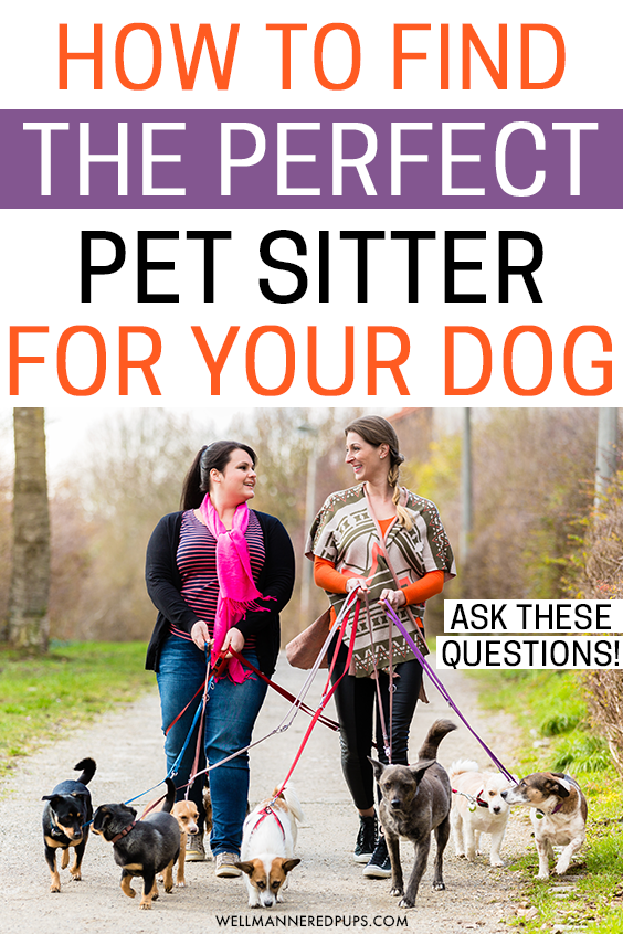 How to find the perfect pet sitter for your dog