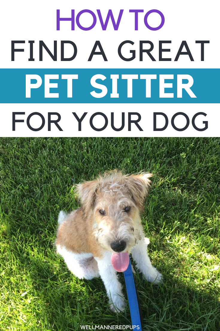 How to find a great pet sitter for your dog