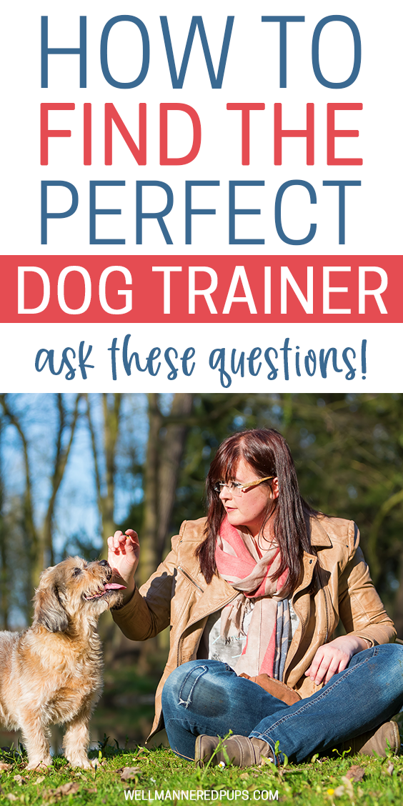 How to find the perfect dog trainer