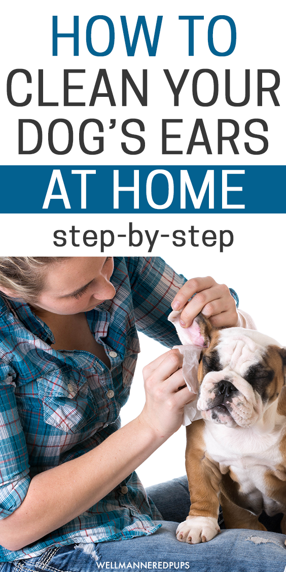 how to clean your dog's ears step-by-step