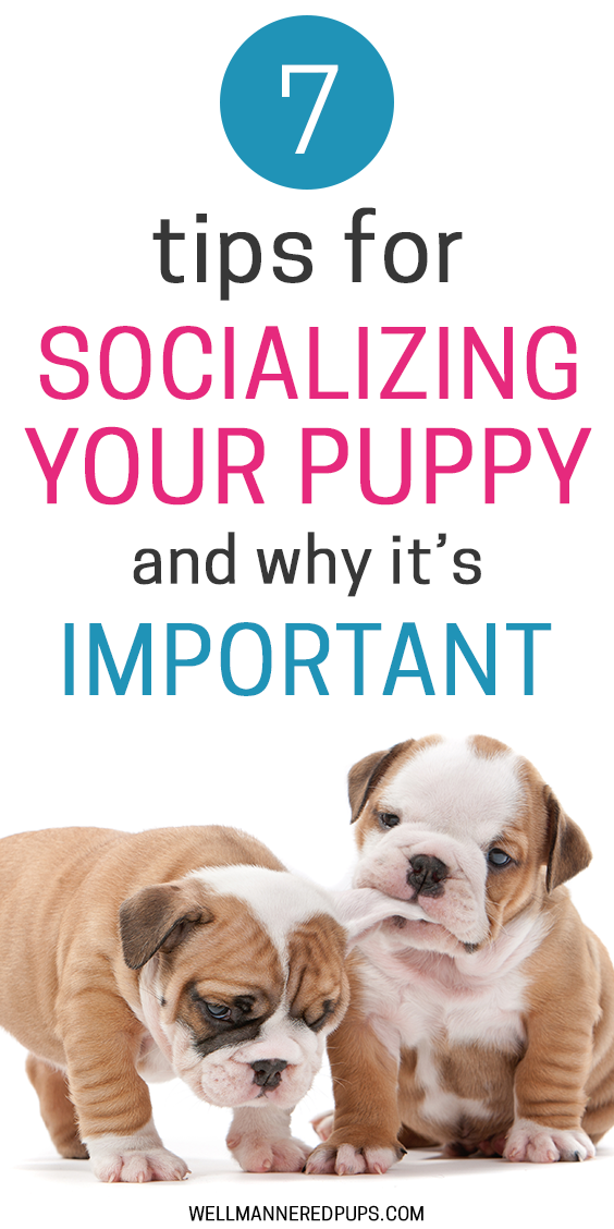 Tips for socializing your puppy