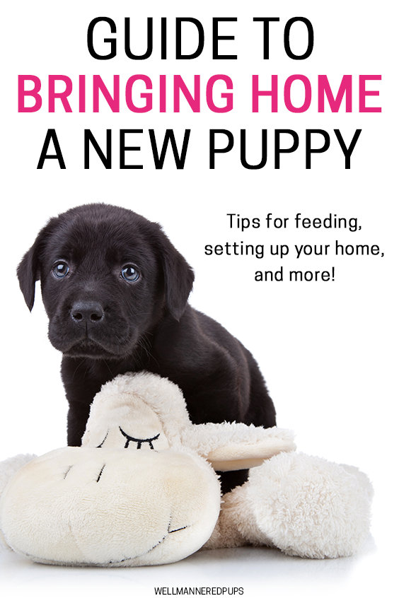 How to care for a new puppy
