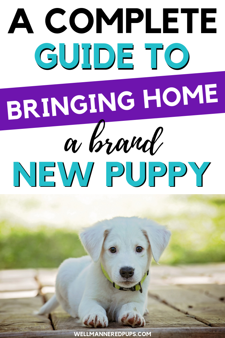 Complete guide to bringing home a new puppy