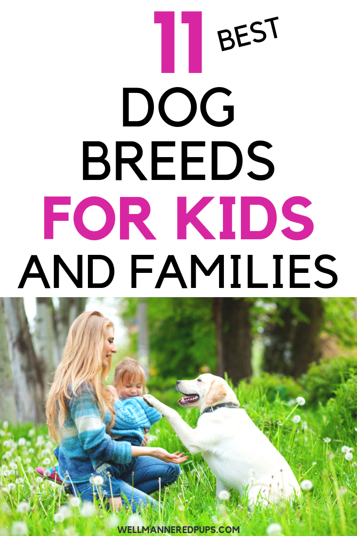 Best dog breeds for kids and families