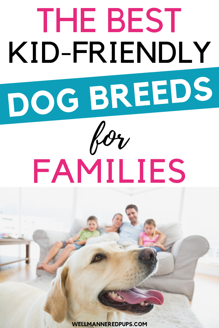 Best kid-friendly dog breeds for families