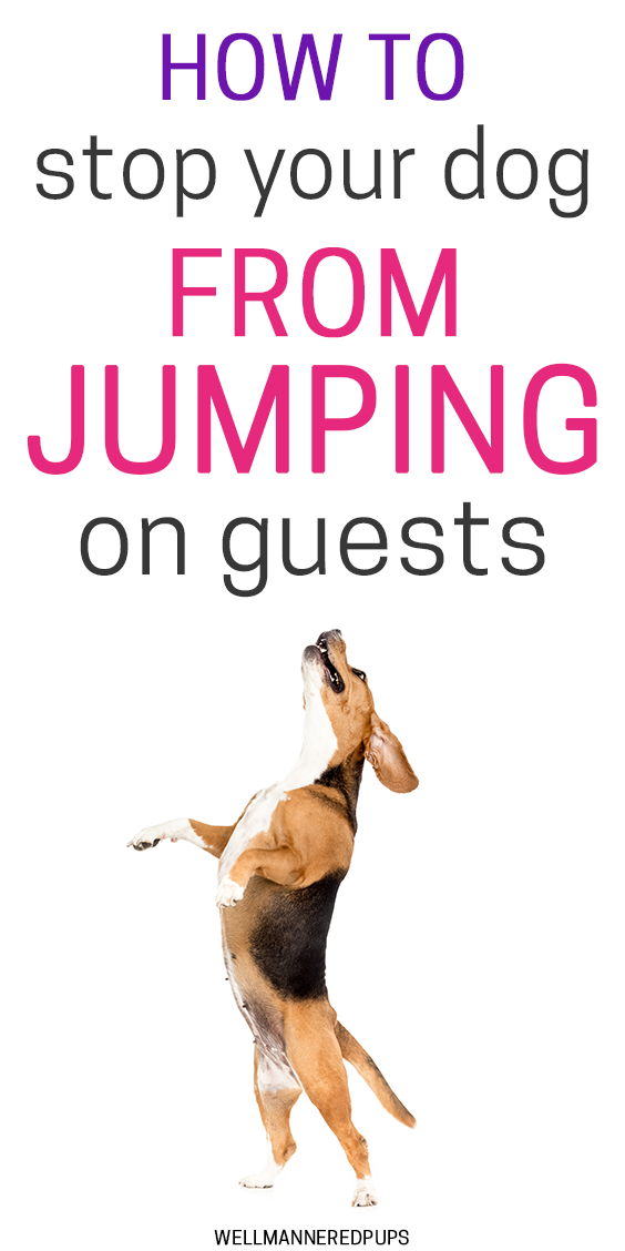 How to stop your dog from jumping on guests