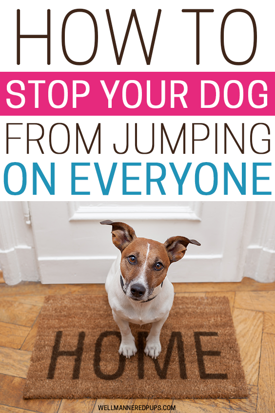 How to stop your dog from jumping on people